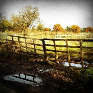 autumn fields fencepost