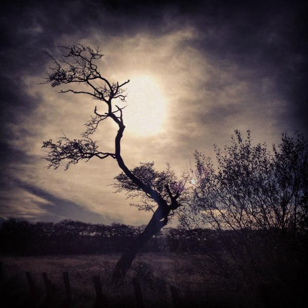 hawthorn silhouette