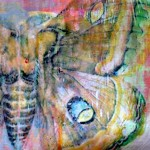 Butterfly Acrylic Transfer Detail